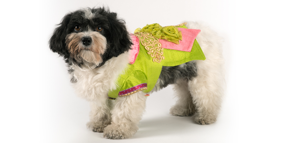 SilkenDelight-LongJacket-1_rococo_dog_clothing.jpg