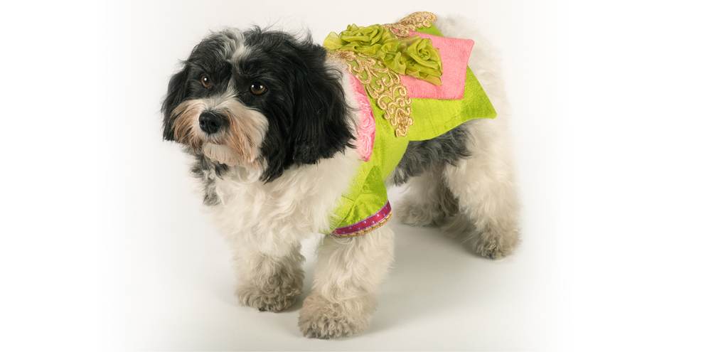 SilkenDelight-LongJacket-3_rococo_dog_clothing.jpg