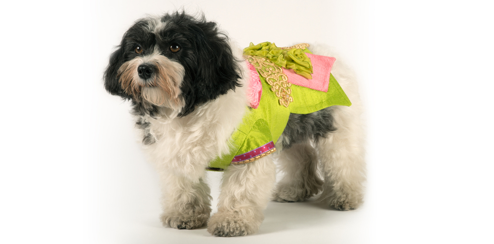 SilkenDelight-LongJacket-2_rococo_dog_clothing.jpg