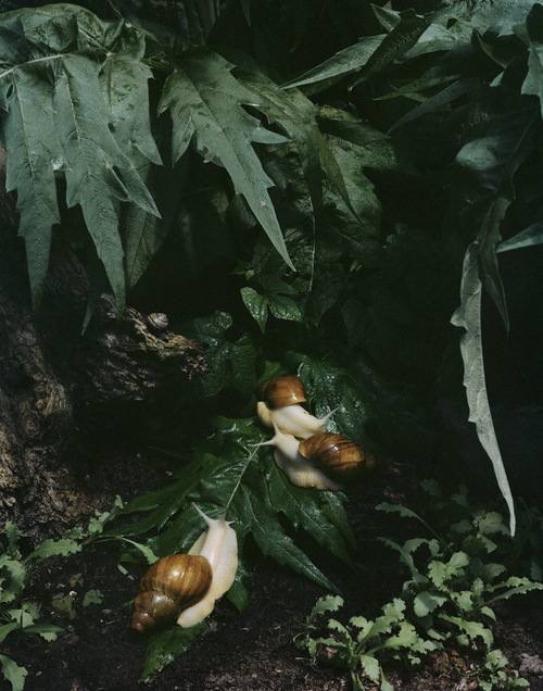 Untitled #7 -  from  Understory,  2015, 18 x 14 inches, Archival Pigment Print