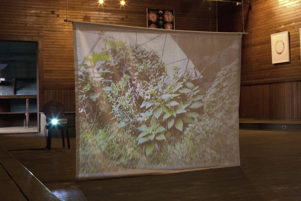 Understory - Live View, live stream projection, 2017