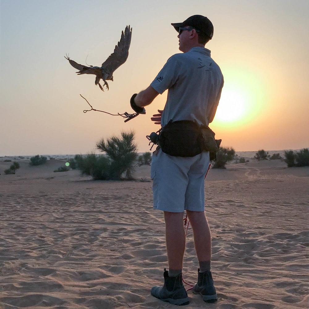 The falcon show
