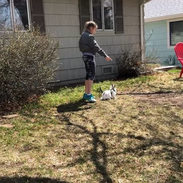 Nothing to see here. Just a girl taking her bunny for a walk. Charlotte insisted we needed a bunny leash and she was absolutely correct.  #bunnies #bunniesofinstagram