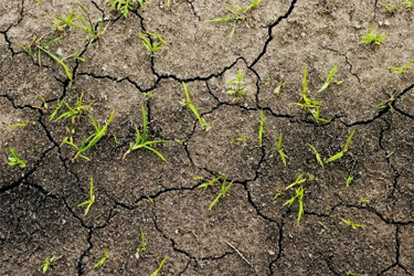 Many of today's soils have been degraded by over-farming and the use of inorganic fertilizers.
