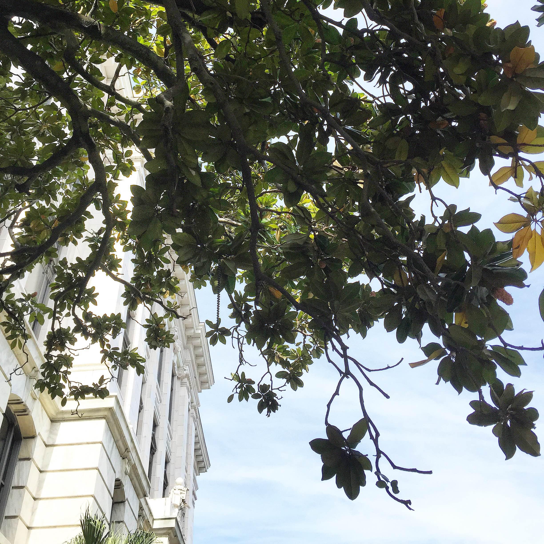 New Orleans + Magnolias