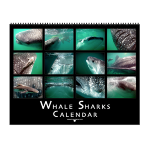 Whale Shark Wall Calendar $24.95  Sale! $19.49