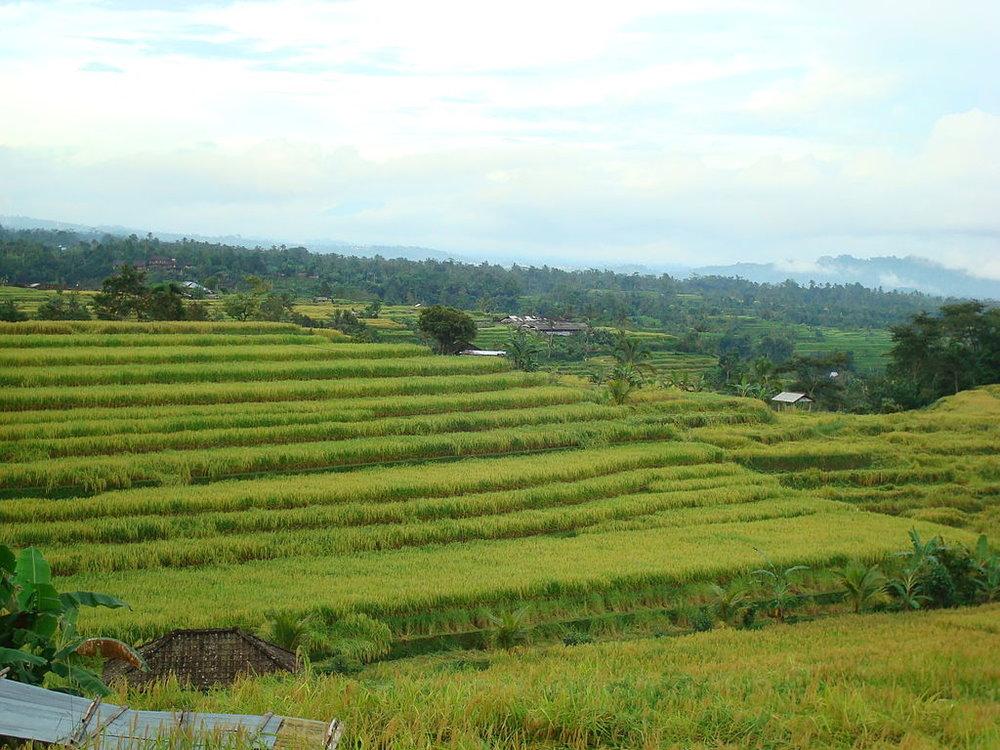 Gunung Batakaru Subak Terraces