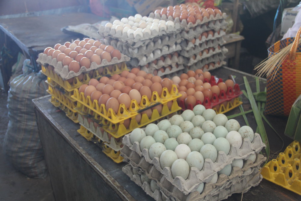 Need Eggs?