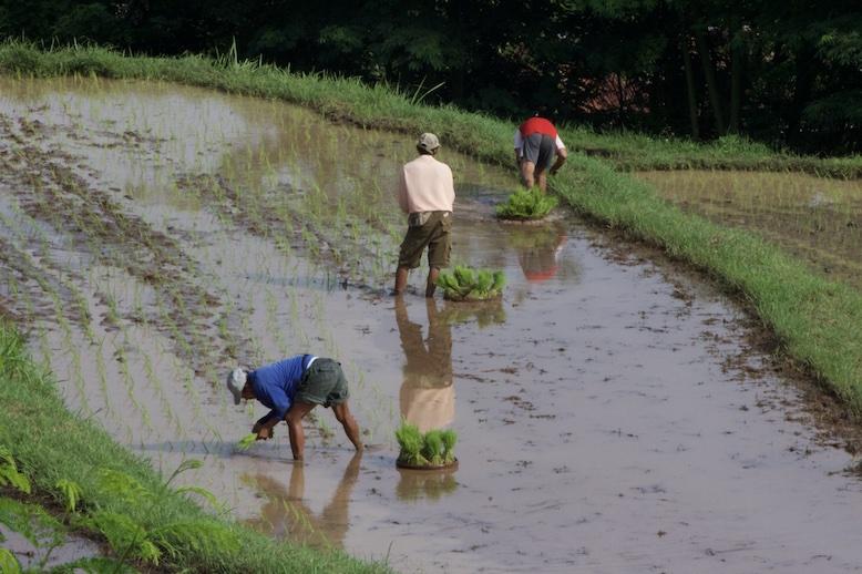 farmers-planting-rice-in-bali.JPG