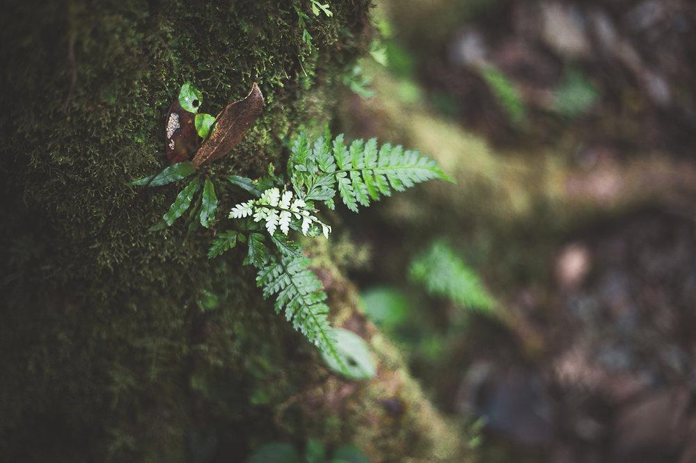 costa Rica 2018-511Dominical drift wood.jpg