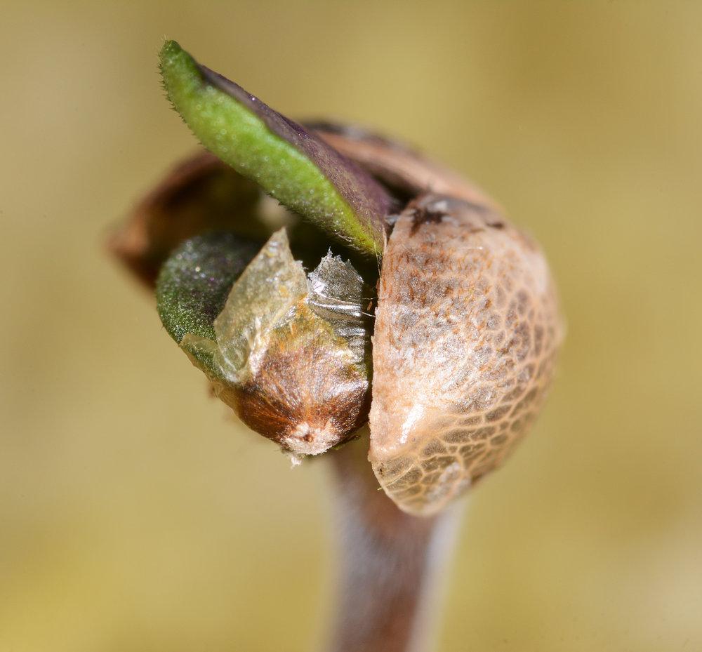 Seed Photo 1.jpg
