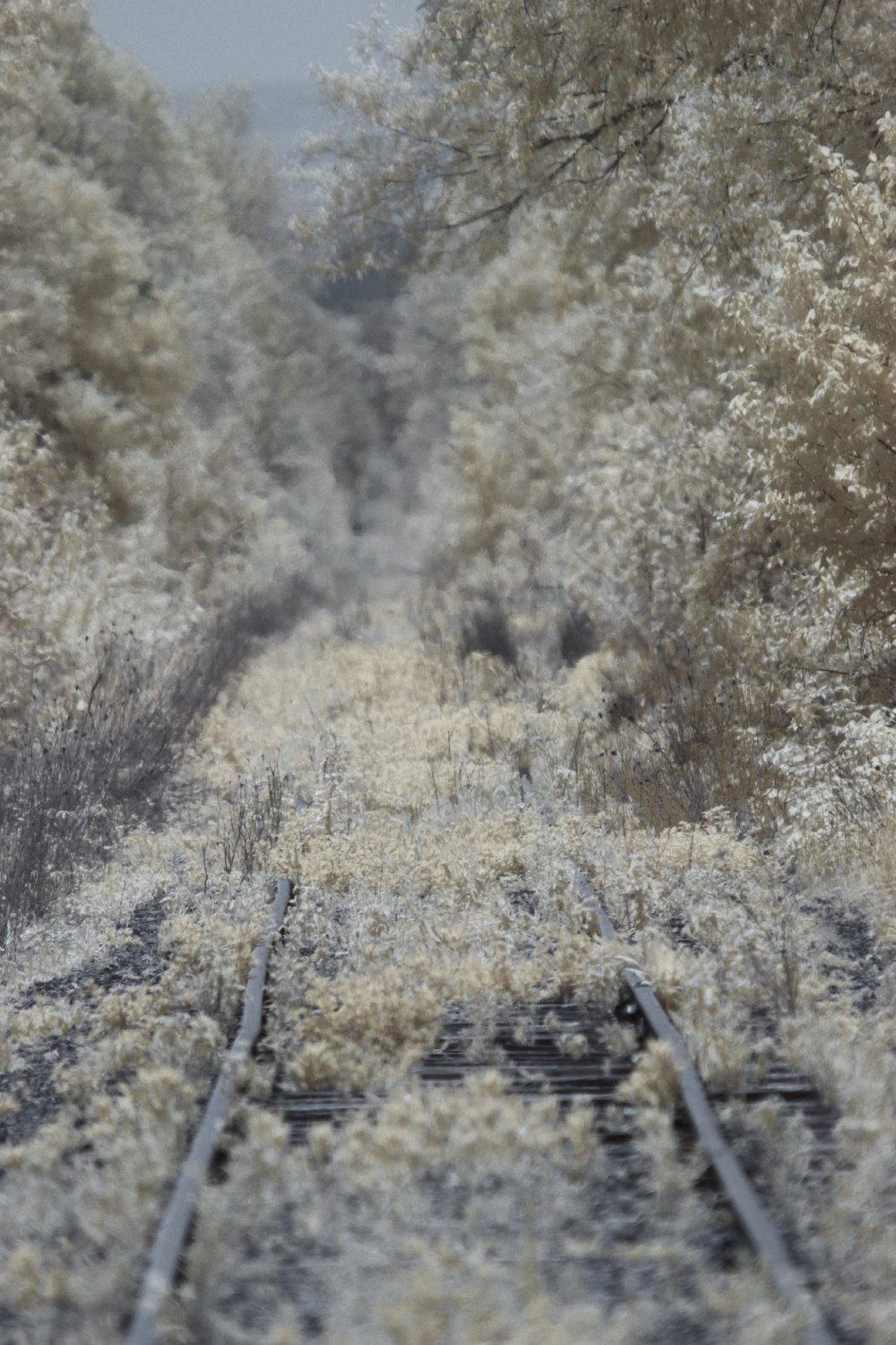 Overgrown tracks to infinity. Colour Infrared on a converted Canon 7D.