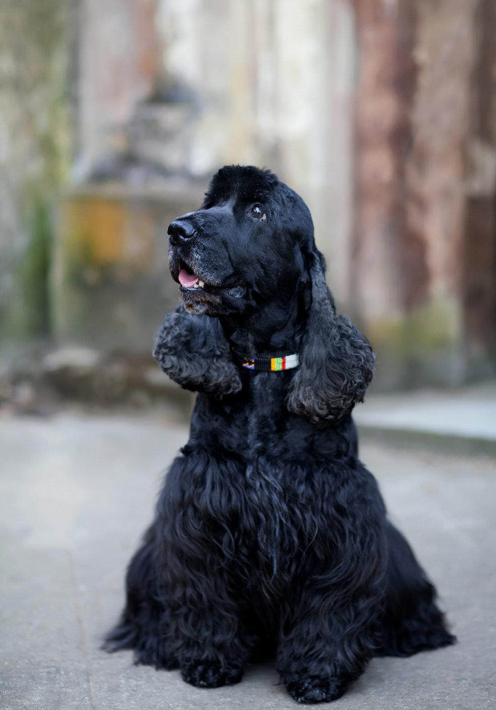 Copy of Copy of Dog portrait