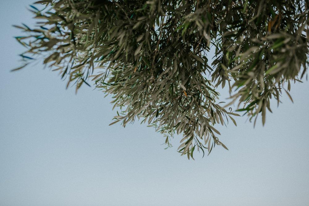TurkeyTrip-Rachel-Watters-Photo35.jpg