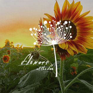 home_flowers.jpg