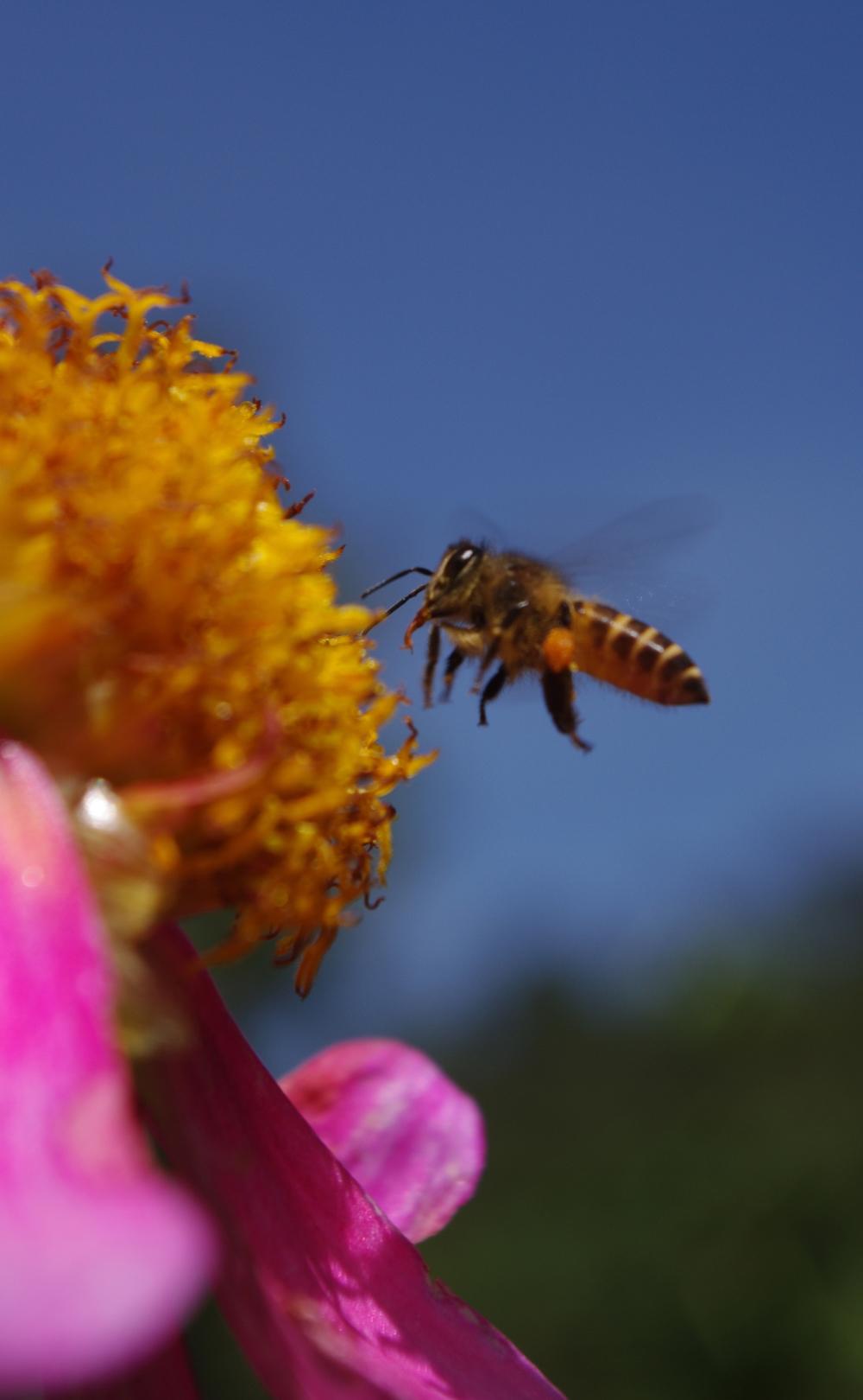 90710-17-flower-bee-eora-creek-sek.jpg