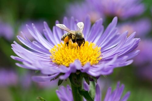 bee-feeding-small.jpg