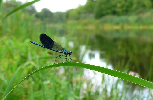 dragonfly-small.jpg