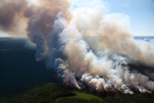 Native forest is routinely cleared by burning, releasing huge amounts of carbon dioxide into the atmosphere.