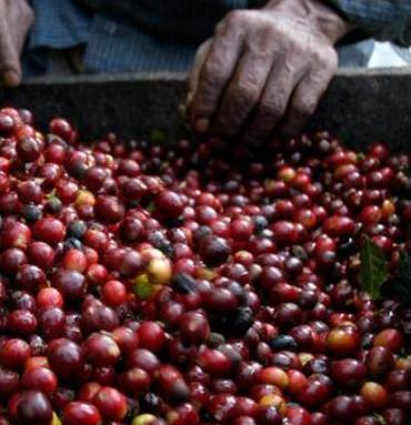 Buying fair trade coffee makes an enormous difference to the lives of producers. There are other ways we can spend our money to make a difference.