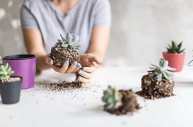 A #GIVE AWAY dedicated to creativity & connection!☀️ Want to join us this Saturday morn for a Make-Your-Own Terrarium (to keep!) Workshop at @kitandace + A peruse through the stunning clothing that adorns Kit & Ace's #GrevilleStreet store?  We have FIVE double passes for this one hour terrarium workshop (9am-10am in #Prahran) to GIVE AWAY today! 🙌 Amazing! A beautiful opportunity to connect with a friend doing something creative and new 😊 Simply tag the person you'd like to bring with you in the comments below. Winners drawn Thursday 26 October!  #melbourneevents #wellineux #thisiskitandace