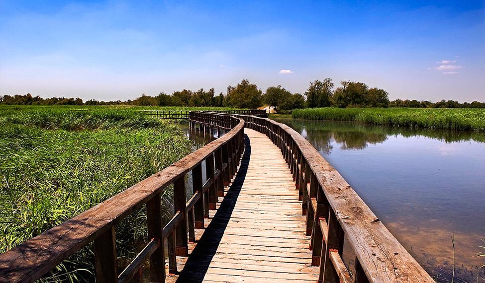 Las Tablas de Daimiel (cerca de Almagro). http://www.turismocastillalamancha.es/naturaleza/parque-nacional-las-tablas-de-daimiel-52771/descripcion/