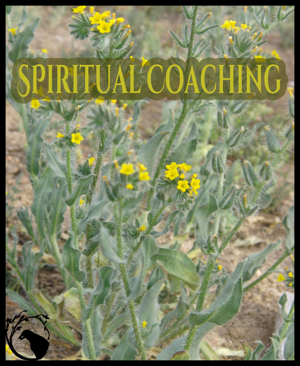 spiritual coaching yellow flowers esoteric occult spirits guidance teaching learn to mentor empowerment courage