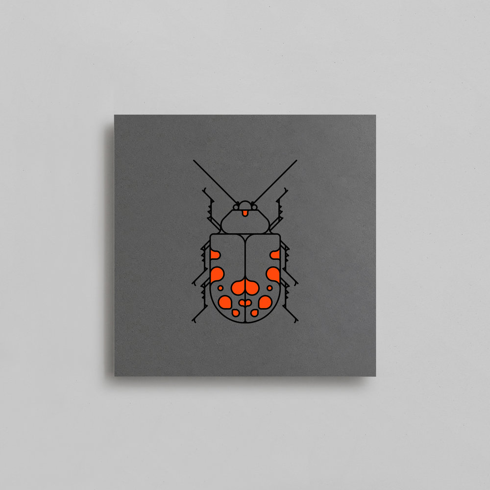 $30 + SHIPPING COLEOPTERA BEETLES | NEON ORANGE