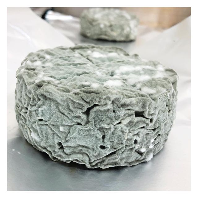 Today we wrapped some proper belters👌 In the shops this weekend #isleofwightblue @alison.gorman @indigorose91 @tarabarnes_x #isleofwightcheese