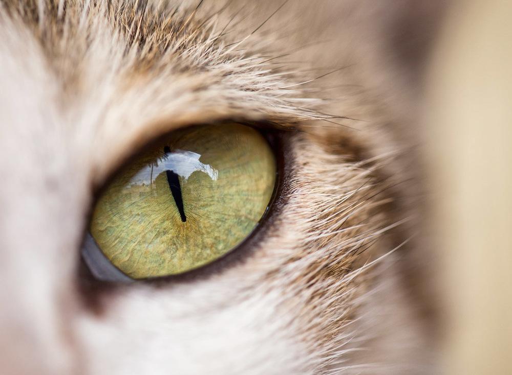 Audi_Animals-3.jpg