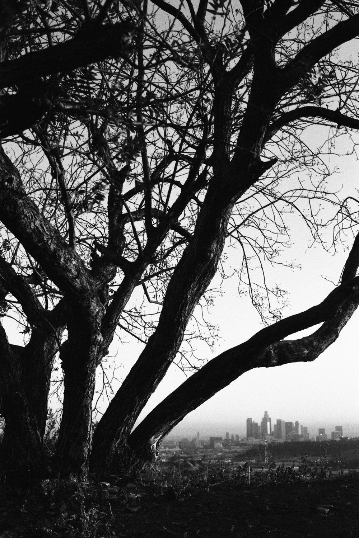 Tree LA.jpg
