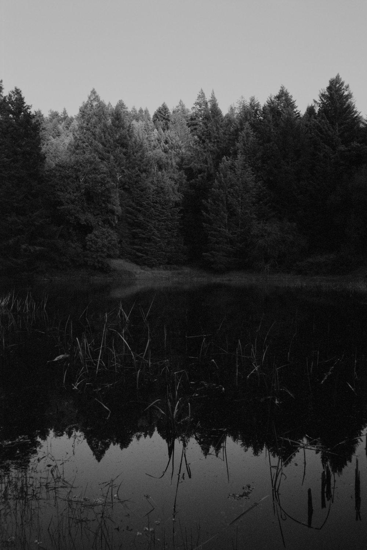 woodspond.jpg