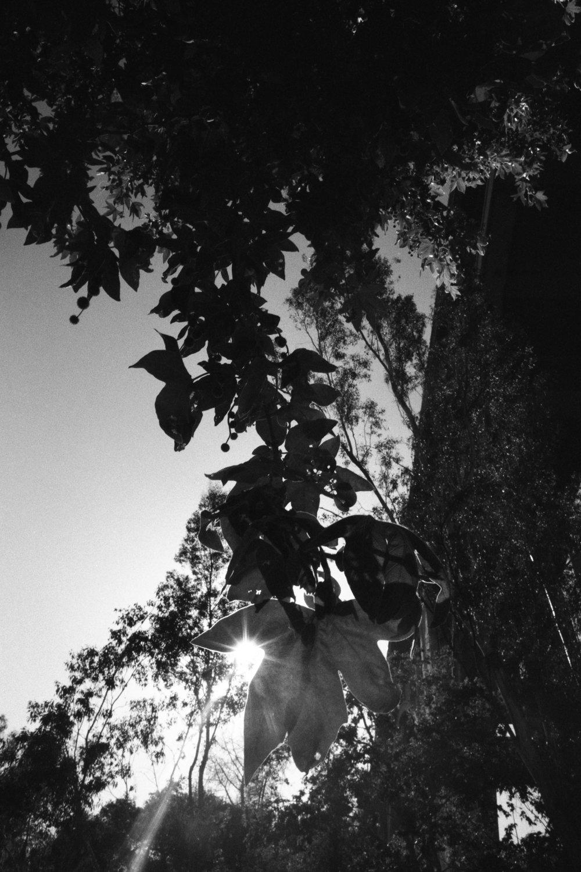hanging sun.jpg