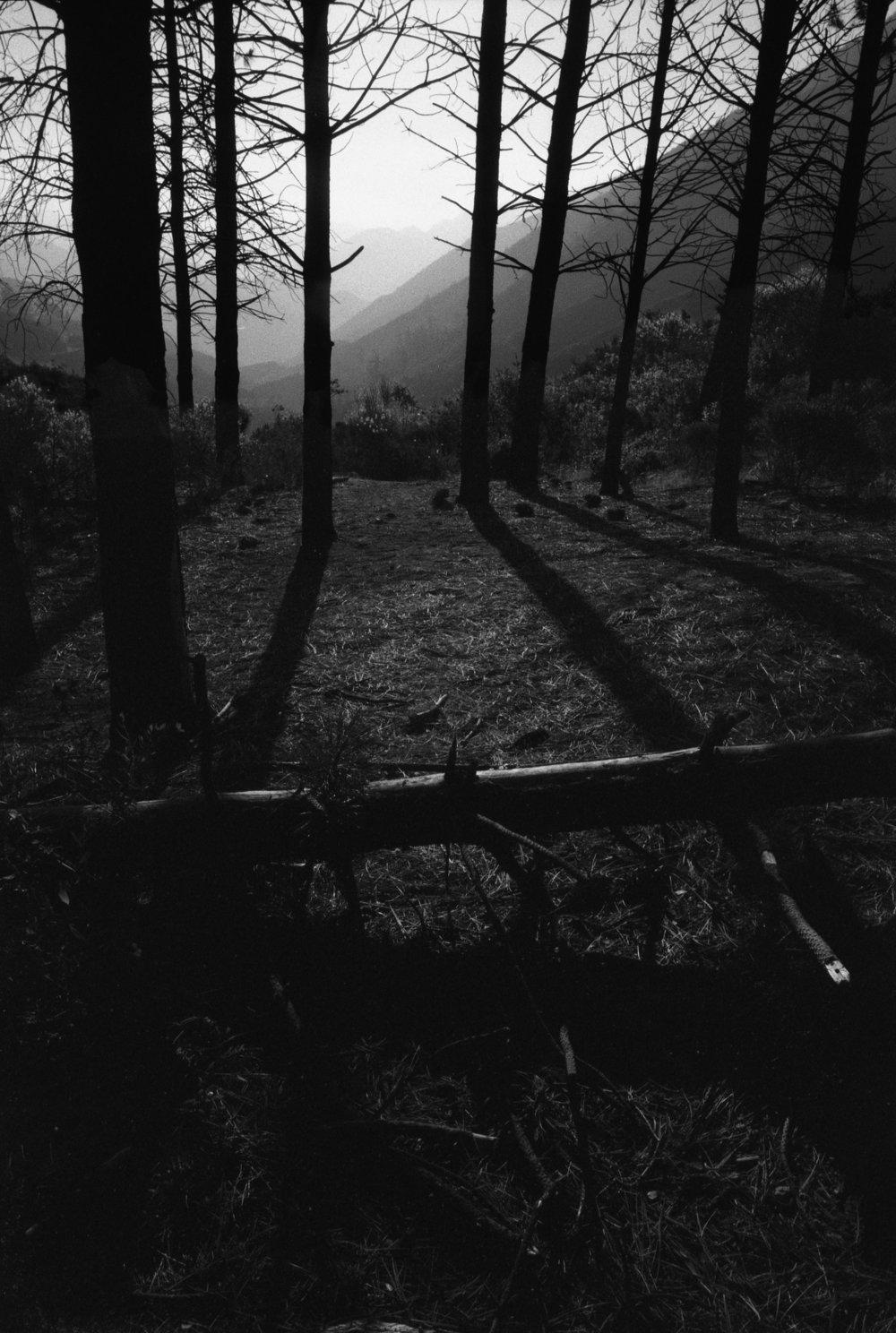 Tree down.jpg