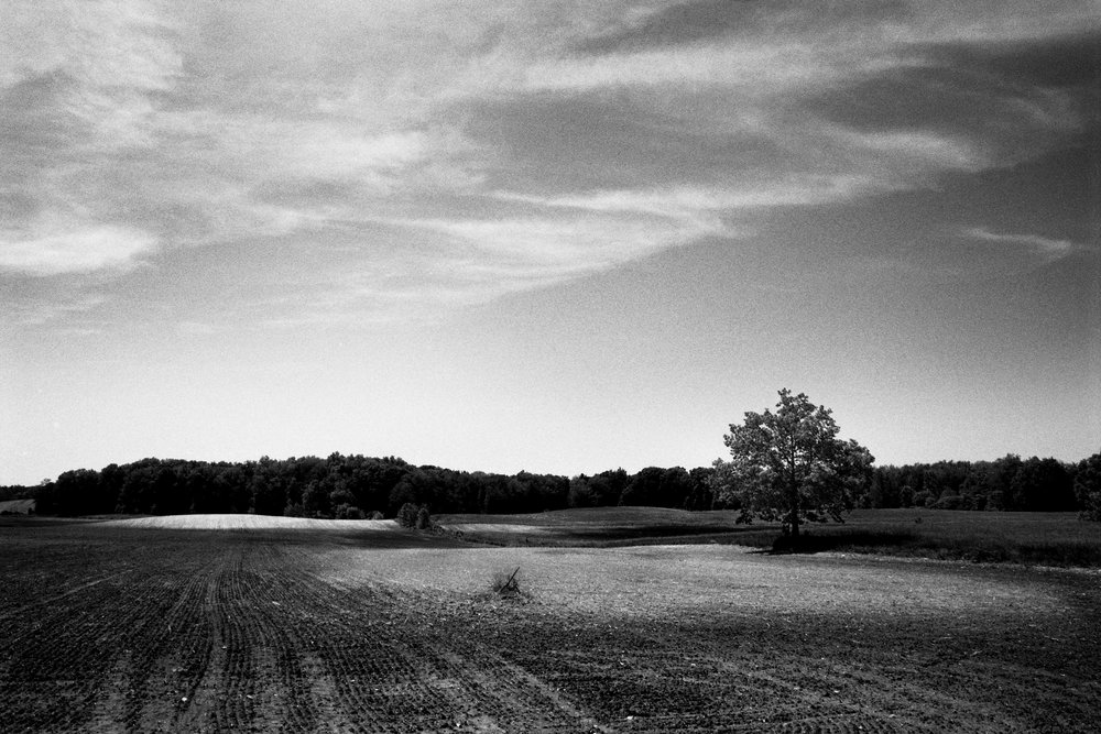 Tree & Field 1.jpg