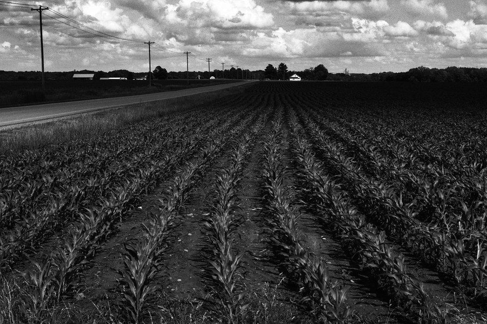 Corn Feild 2.jpg