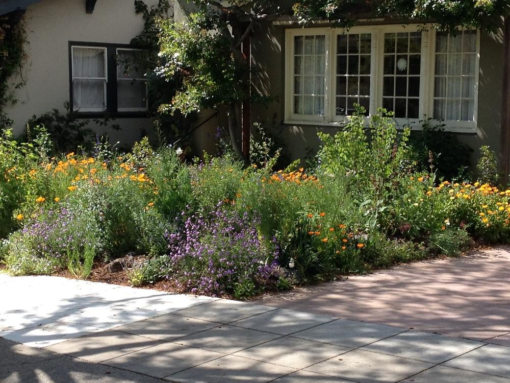 Piedmont CA Native Garden