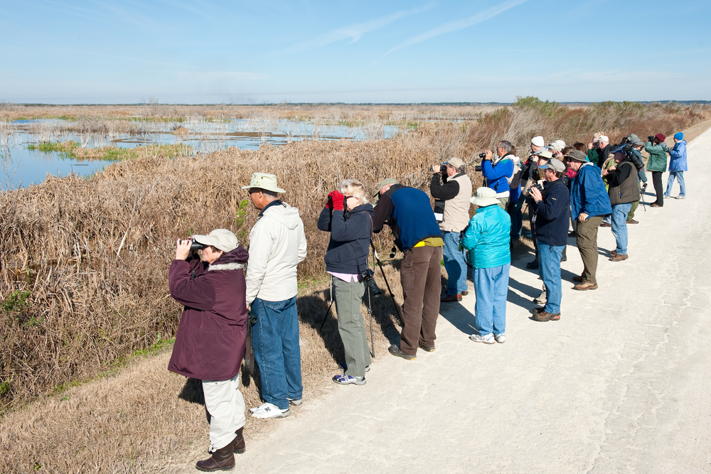 Birders on the Lake Apopka North Shore Wildlife Drive