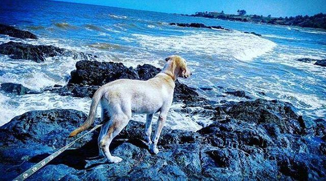 El mejor amigo del hombre también 💗 #AndromedaPedasi 🙆. Foto gracias a @tu_antonio18. #DogLover #ocean #nature #lifestyle.