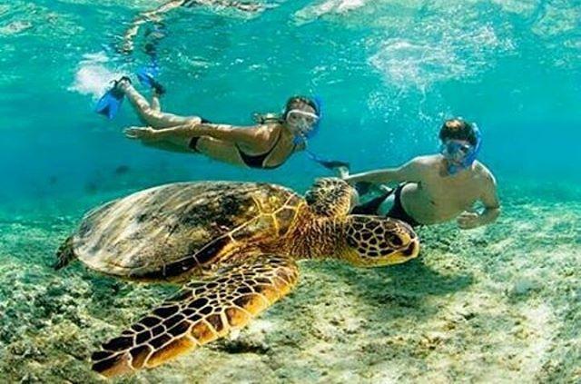 ¿Cuál es el animal más asombroso con el que te has topado haciendo #snorkeling? #VisitPedasi #biodiversity #ocean #nature #adventure 📷: @ketekatravel 🙌.
