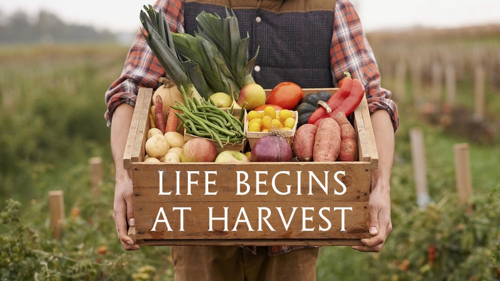 Life Begins at Harvest.jpg