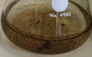 Plectosphaerella cucumerina  DS2psM2a2 + 0.2 mM Mn2+