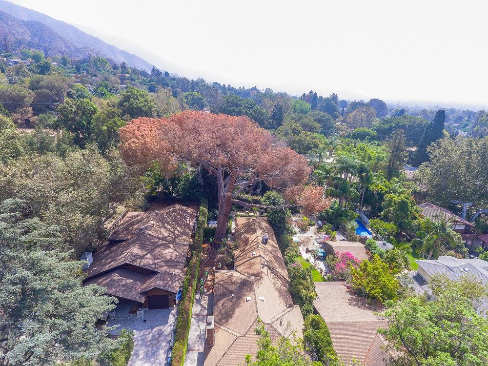 Mariposa Tree Removal Aerial 2-1.jpg