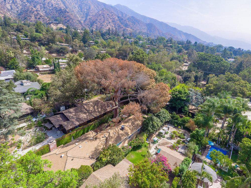 Mariposa Tree Removal Aerial 2-2.jpg