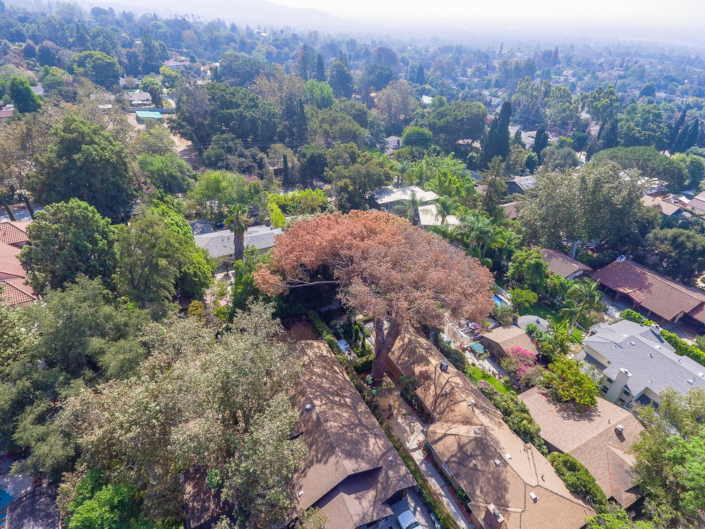 Mariposa Tree Removal Aerial 2-16.jpg