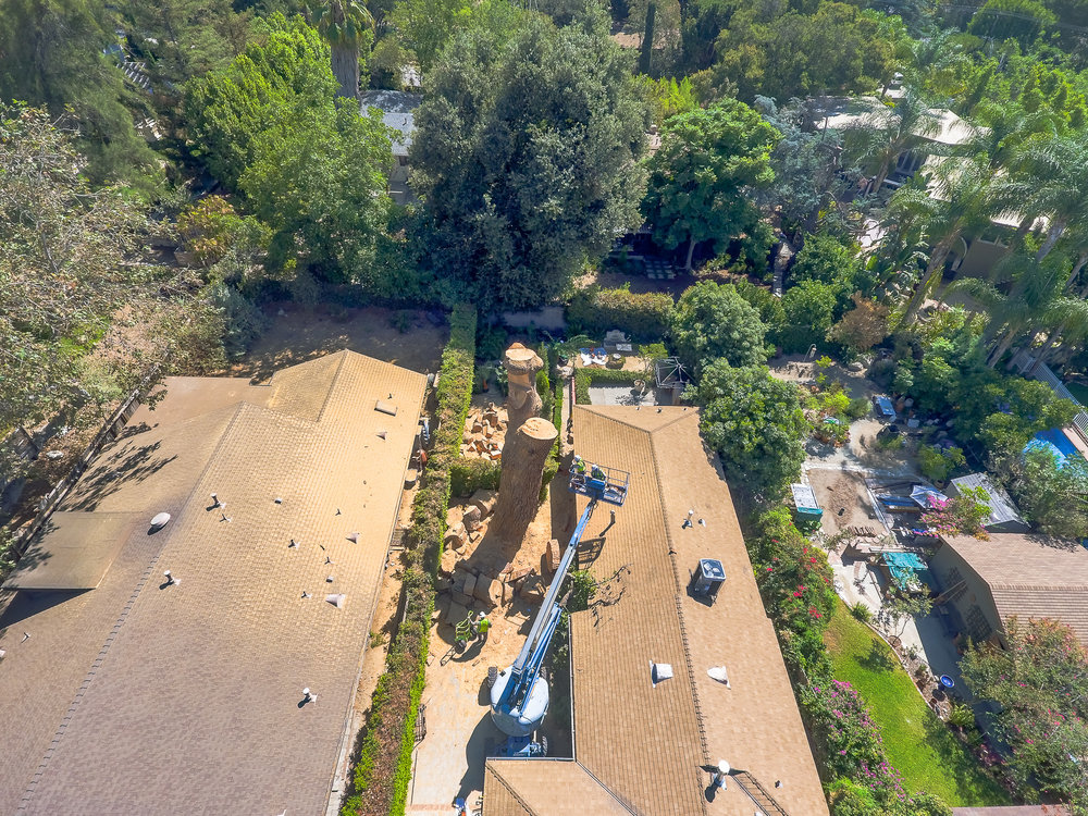 Mariposa Tree Removal Aerial 3-33.jpg