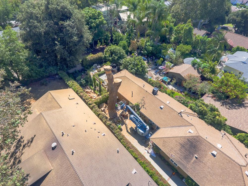 Mariposa Tree Removal Aerial 3-39.jpg