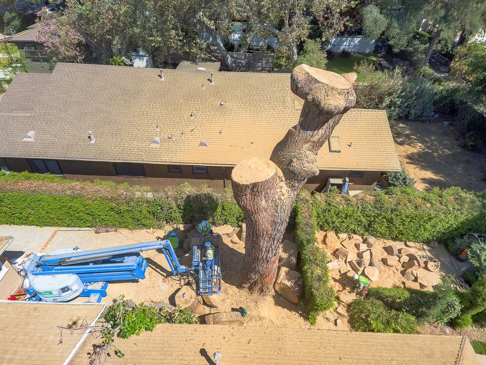Mariposa Tree Removal Aerial 3-40.jpg