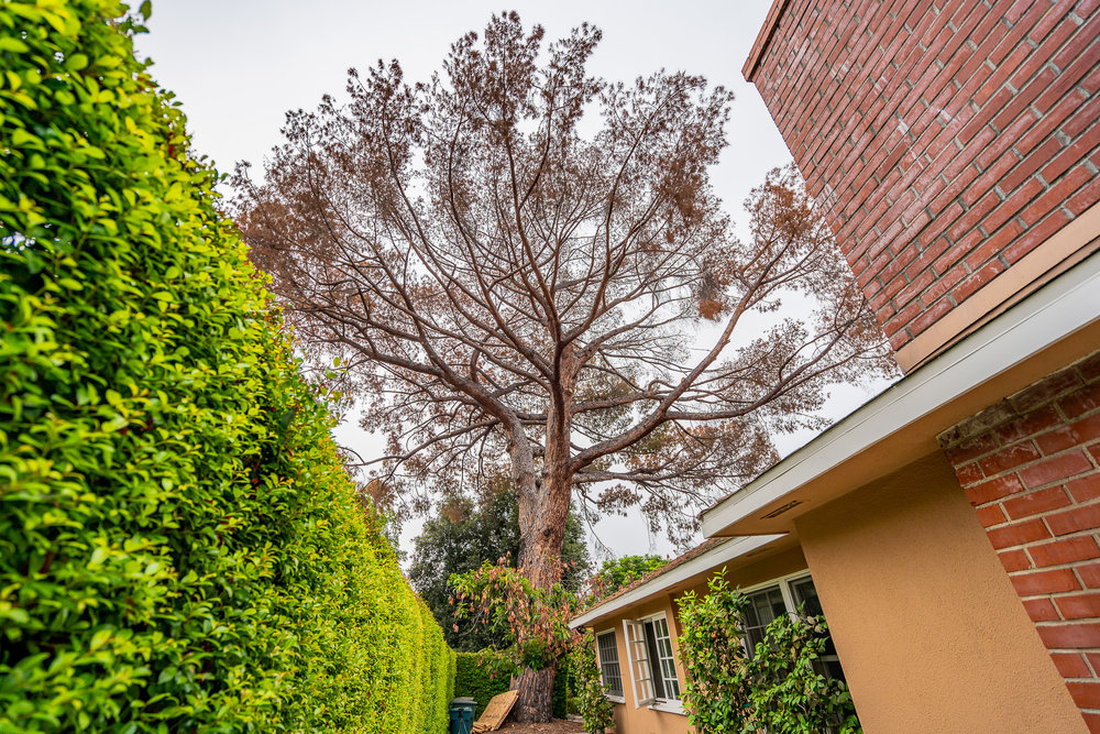 Mariposa Tree Removal Ground-7.jpg