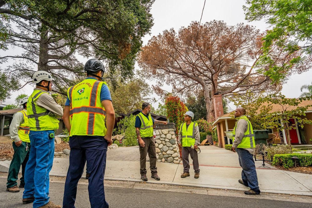 Mariposa Tree Removal Ground-9.jpg